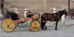 TRADITIONAL HORSE DRAWN CARRIAGES