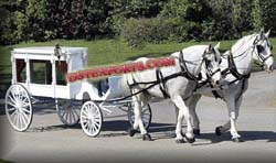 WHITE FUNERAL HORSE CARRIAGE