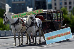 KING HORSE DRAWN CARRIAGE